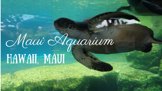 Maui Aquarium and Swimming with Turtles?!